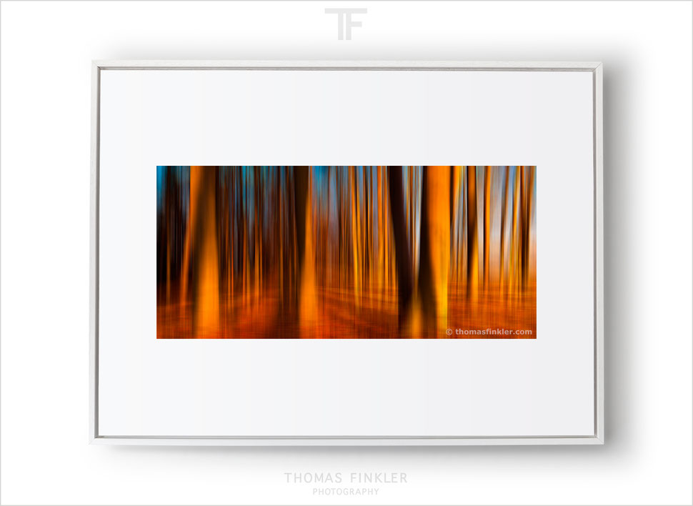 Abstract forest photography, abstract nature fine art photography, wall art, most beautiful vibrant colors, red, orange, blurry trees, seasons