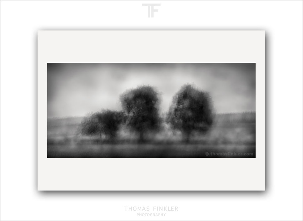 Fine art, photography, print, monochrome, black and white, tree, impressionist, abstract, blurry, trees, art, prints for sale, buy prints, online