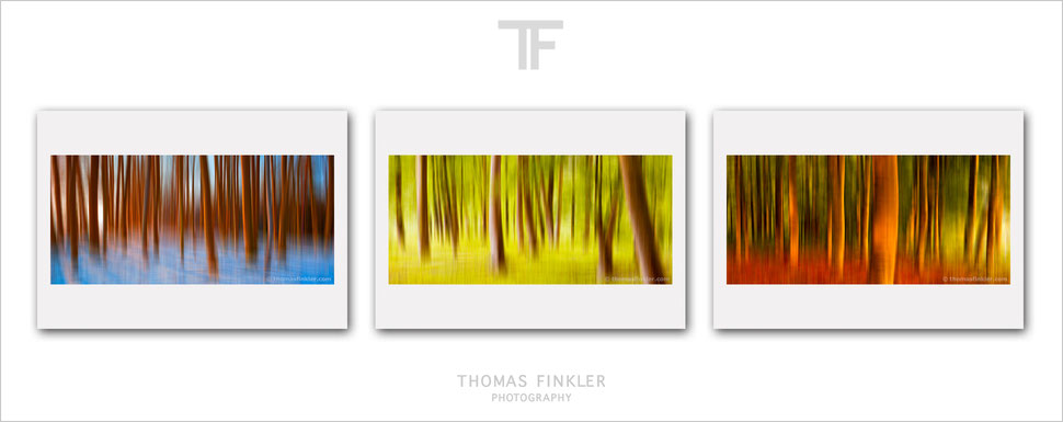 Buy, photography, fine art, 3 piece, wall art, triptych, abstract, trees, forest, woods, seasons, abstract nature, prints, art, original, online