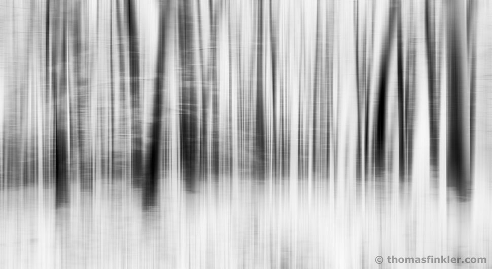 Fine art photography, black and white, monochrome art, composite, abstract, wall art, abstract nature, trees, poetic, vision, prints, for sale