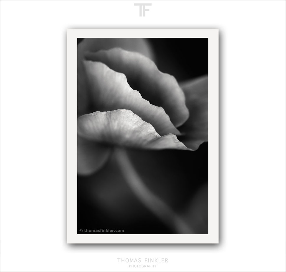 Fine art photography, art photography, nature, abstract, black and white, monochrome, german, germany
