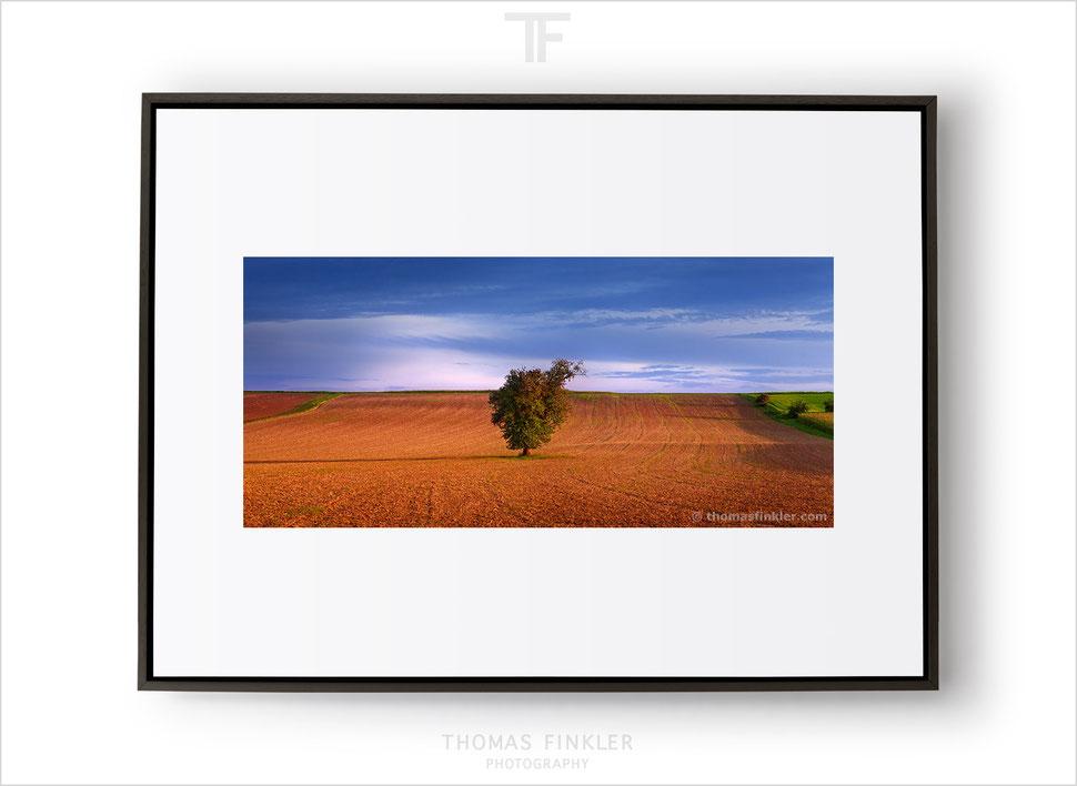 Fine art print, buy fine art prints, fine art prints for sale, fine art photography, nature, landscape, trees, minimal, minimalist, amazing