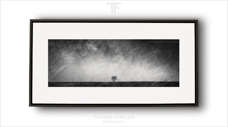 Fine art, photography, black and white, monochrome, panoramic, single tree, solitary tree, minimalist, minimal, limited edition, framed
