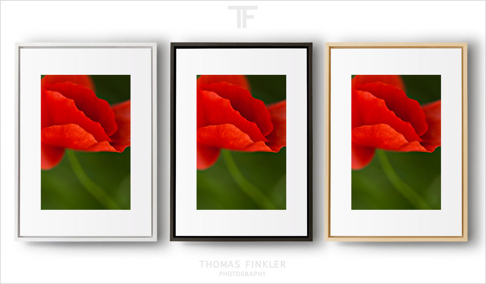 Photography, fine art, wall art, nature, abstract, flower, poppy blossom, color, colour, most beautiful, red, framed, prints, for sale