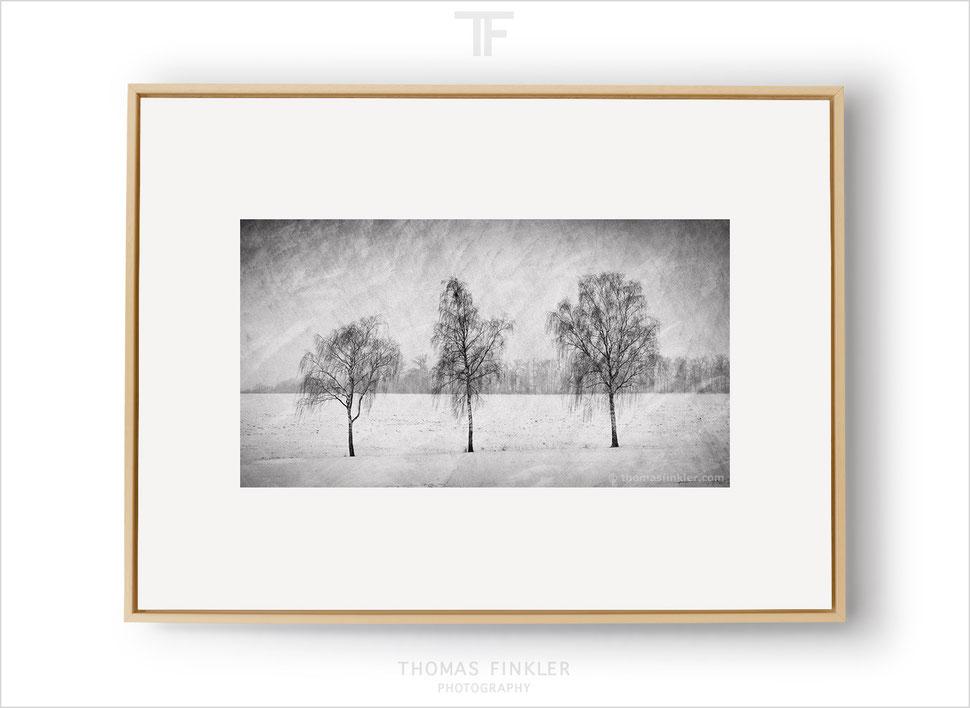 Fine art, photography, black and white, monochrome, winter, snow, tree, nature, landscape, trees, minimal, minimalist, framed