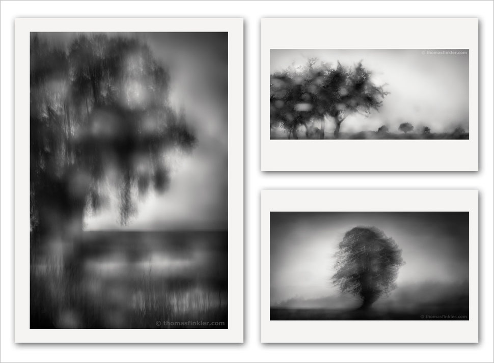 Fine art, photography, black and white, monochrome, abstract, tree, nature, trees, amazing, most beautiful, atmospheric, impressionist