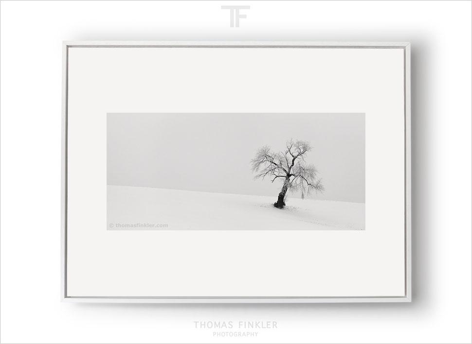 Fine art, print, prints, black and white, monochrome, tree, nature, minimalist, photography, art, prints for sale, buy prints, limited edition