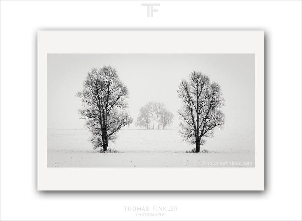 Fine art, black and white, monochrome, photography, tree, nature, landscape, trees, snow, winter, minimal, minimalist, award winning