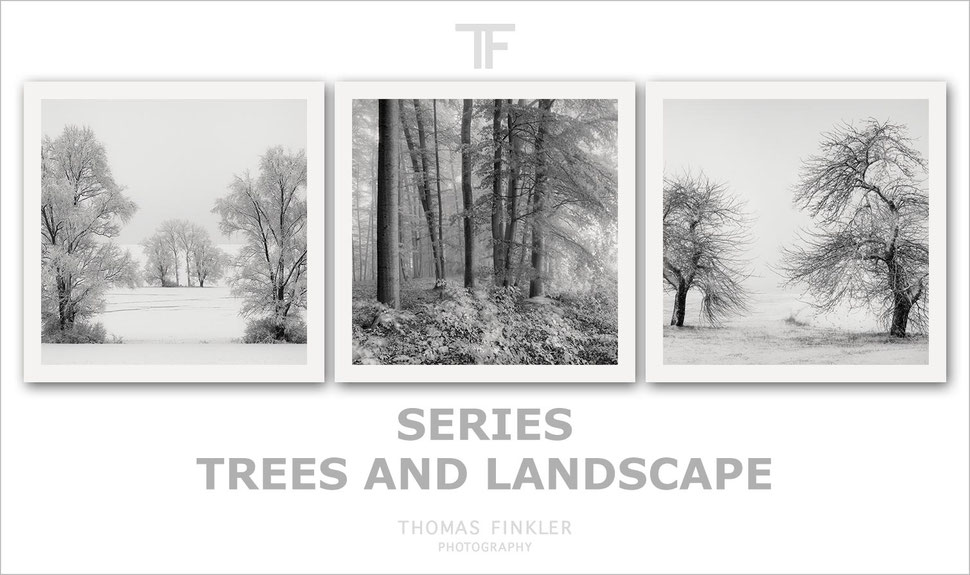 Fine art, photography, black and white, monochrome, nature, tree, landscape, trees, series, most beautiful, poetic, limited edition