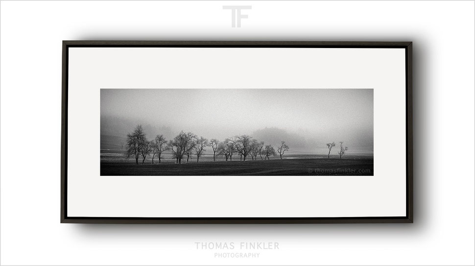 Fine art, photography, print, panoramic, panorama, tree, atmospheric, mist, landscape, nature, trees, art, prints for sale, buy prints, online