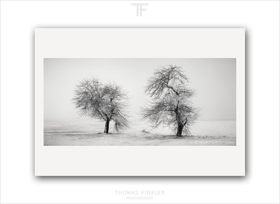 Fine art, photography, photographic, art, black and white, monochrome, tree, nature, landscape, trees, snow, winter, white, limited edition
