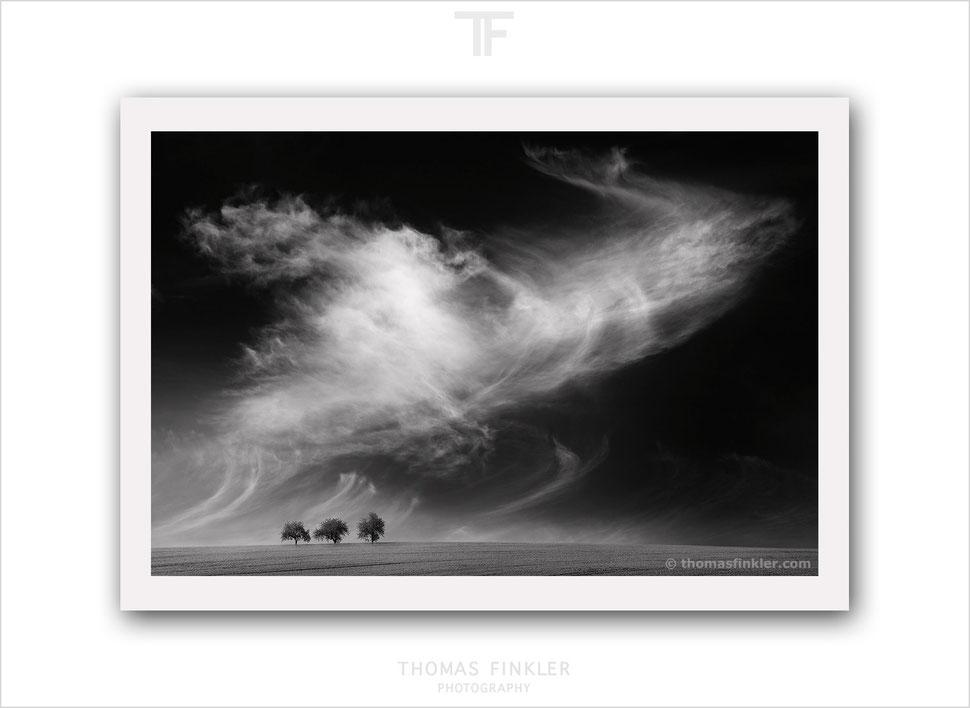 Photography, black and white, monochrome, fine art, nature, landscape, cloudscape, trees, high end, high quality, archival, prints, for sale
