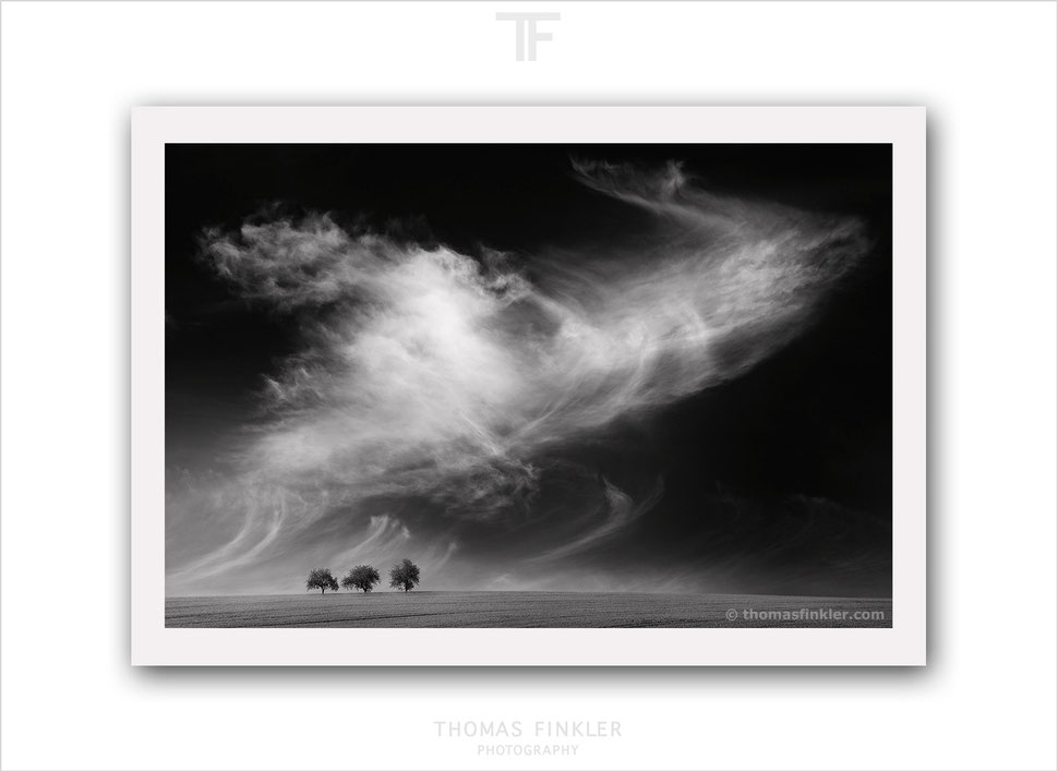 Buy prints, art, fine art, photography, minimal, minimalist, sky, cloud, cloudscape, landscape, tree, prints for sale, limited edition