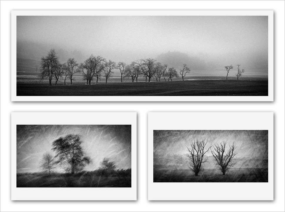 Fine art, photography, black and white, monochrome, tree, nature, trees, photographer, photo artist, german, germany, bavaria