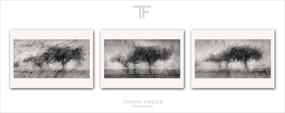 Buy, photography, fine art, monochrome, 3 piece wall art, abstract, nature, trees, modern, contemporary, art, composite, archival, prints