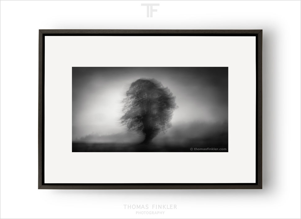 Fine art photography, art photography, tree, nature, trees, abstract, german, germany
