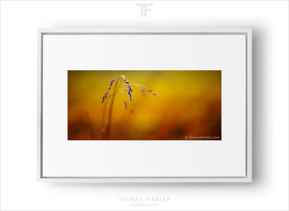 Thomas Finkler Photography, fine art nature photography, minimal photography, colorful, poetic, abstract, minimalist