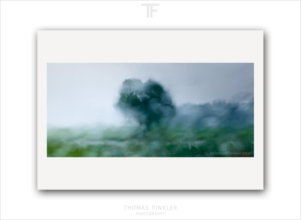 Art, fine art, photography, tree of life, single tree, abstract, nature, landscape, atmospheric, impressionist, rainy, blurry, color, colour
