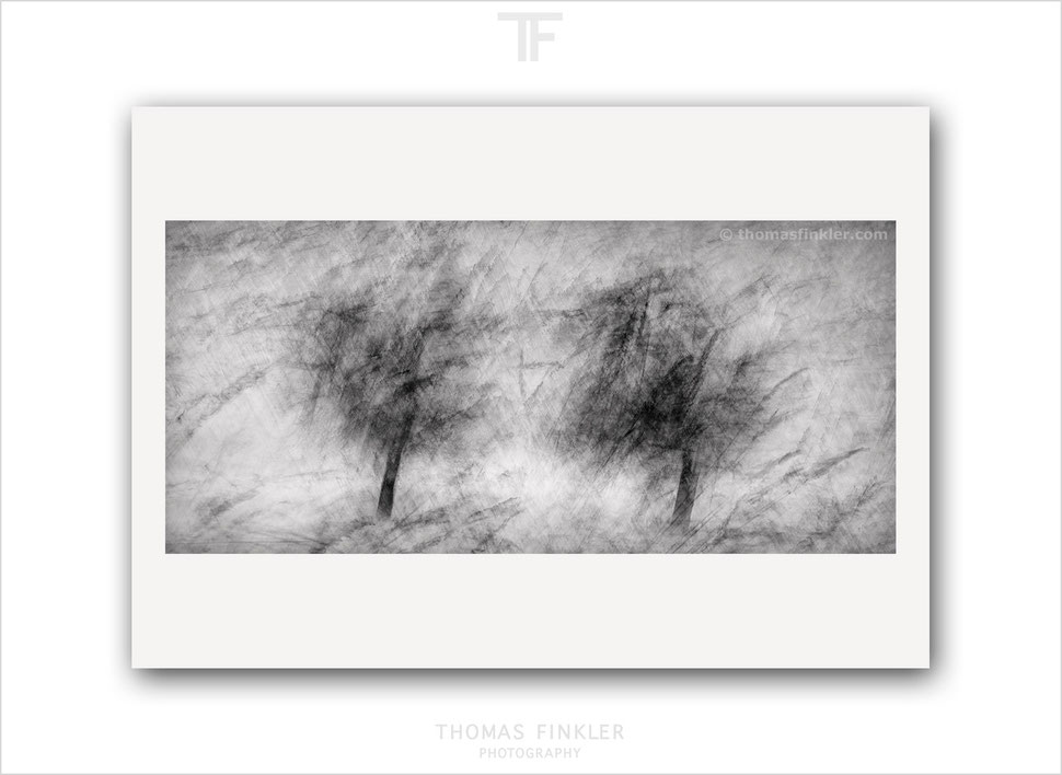 Tree, fine art, photography, black and white, monochrome, print, trees, abstract, limited edition, art, prints for sale, buy prints, online
