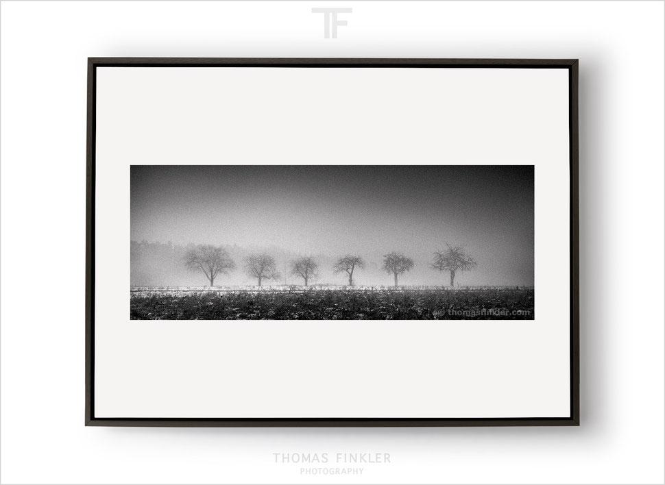 Fine art, photography, black and white, monochrome, tree, nature, trees, landscape, amazing, atmospheric, mist, panoramic