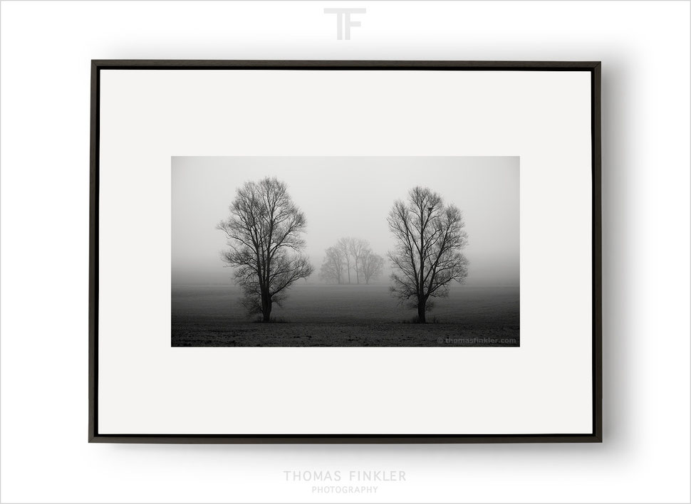 Fine art, photography, art photography, photographic art, tree, nature, trees, landscape, photographer, artist, german, award winning