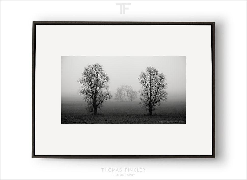 Fine art, black and white, monochrome, photography, photographer, tree, nature, trees, landscape, german, germany, award winning