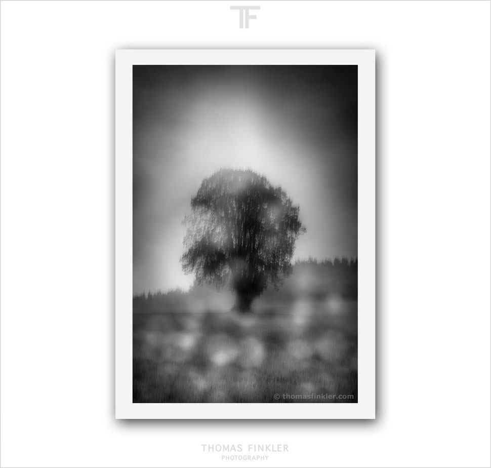 Fine art, photography, print, black and white, abstract, blurry, single tree, solitary tree, art, prints for sale, buy prints, limited edition