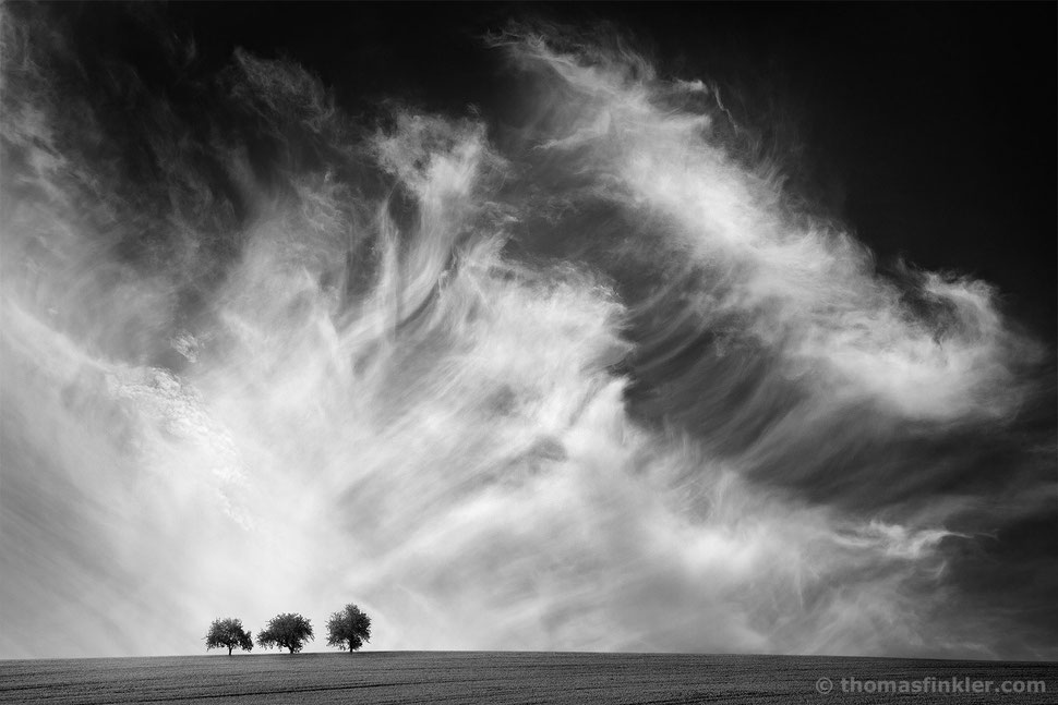 Thomas Finkler Photography, fine art black and white photography, minimal landscape, 3 trees, cloudscape, grain field, scenery, monochrome, poetic