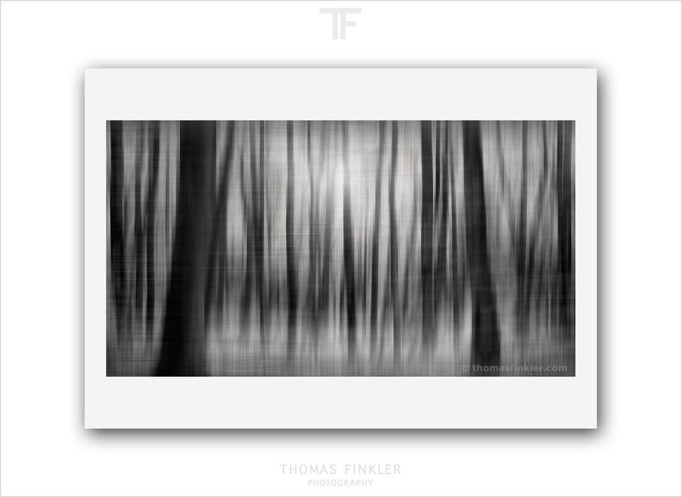 Fine art, photography, print, black and white, monochrome, tree, nature, abstract, trees, limited edition, art, prints for sale, buy prints