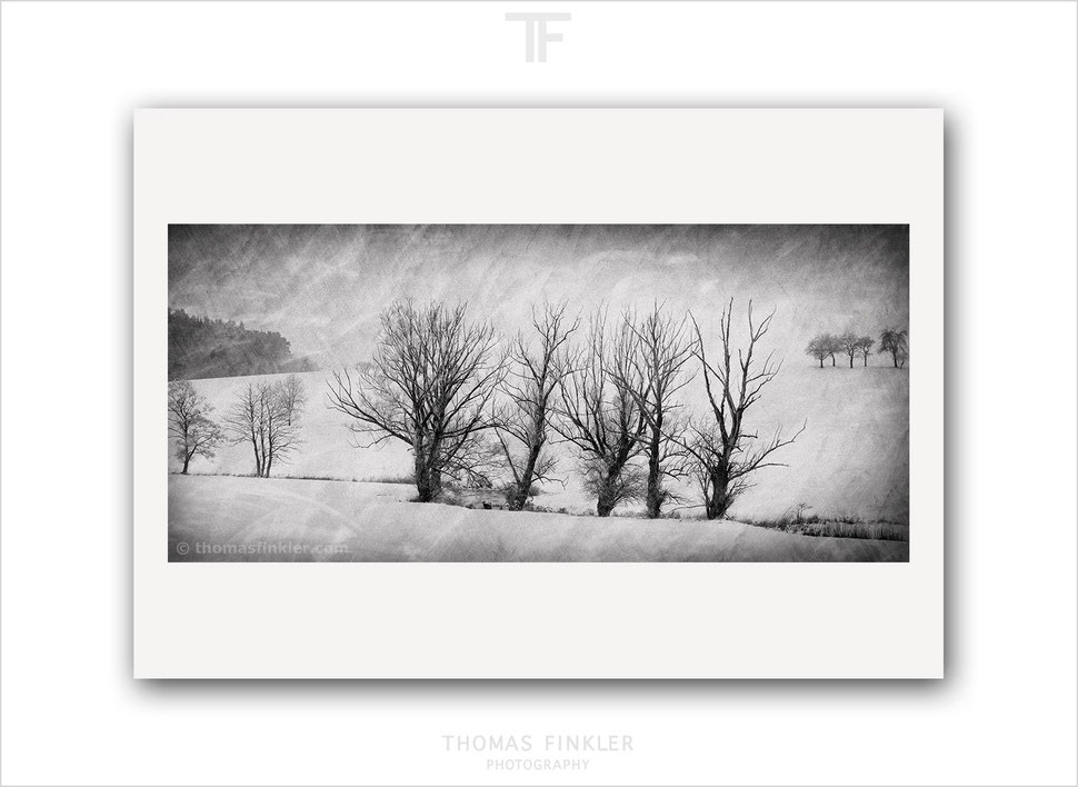 Fine art, photography, black and white, monochrome, winter, snow, tree, nature, landscape, trees, atmospheric, limited edition, online