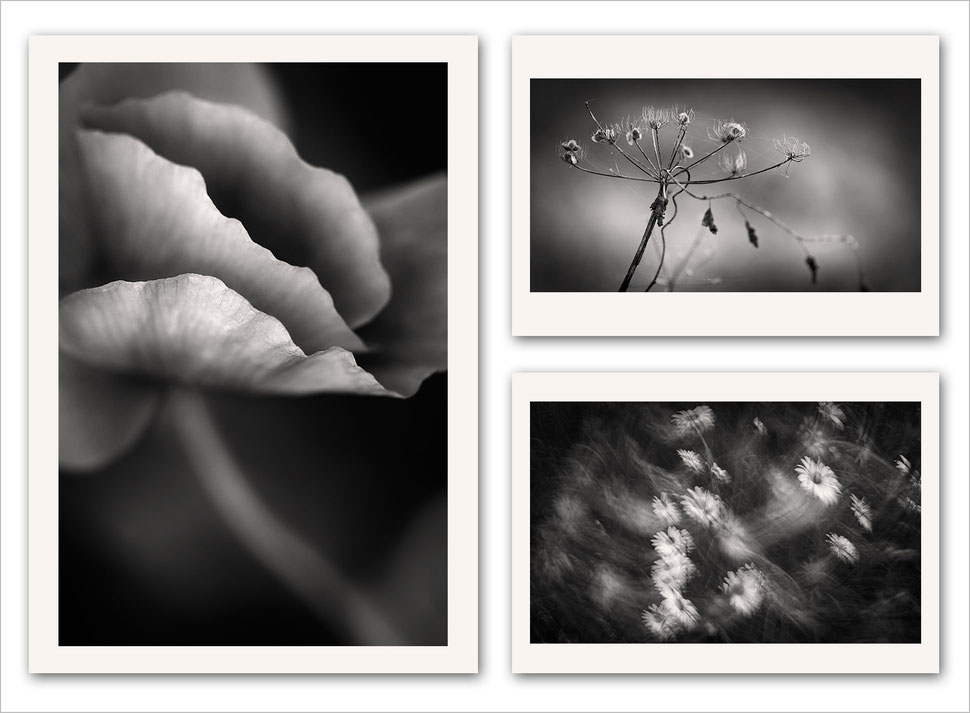 Black and white photography, monochrome fine art, vision, post-processing, techniques, editing, abstract nature, floral, flower