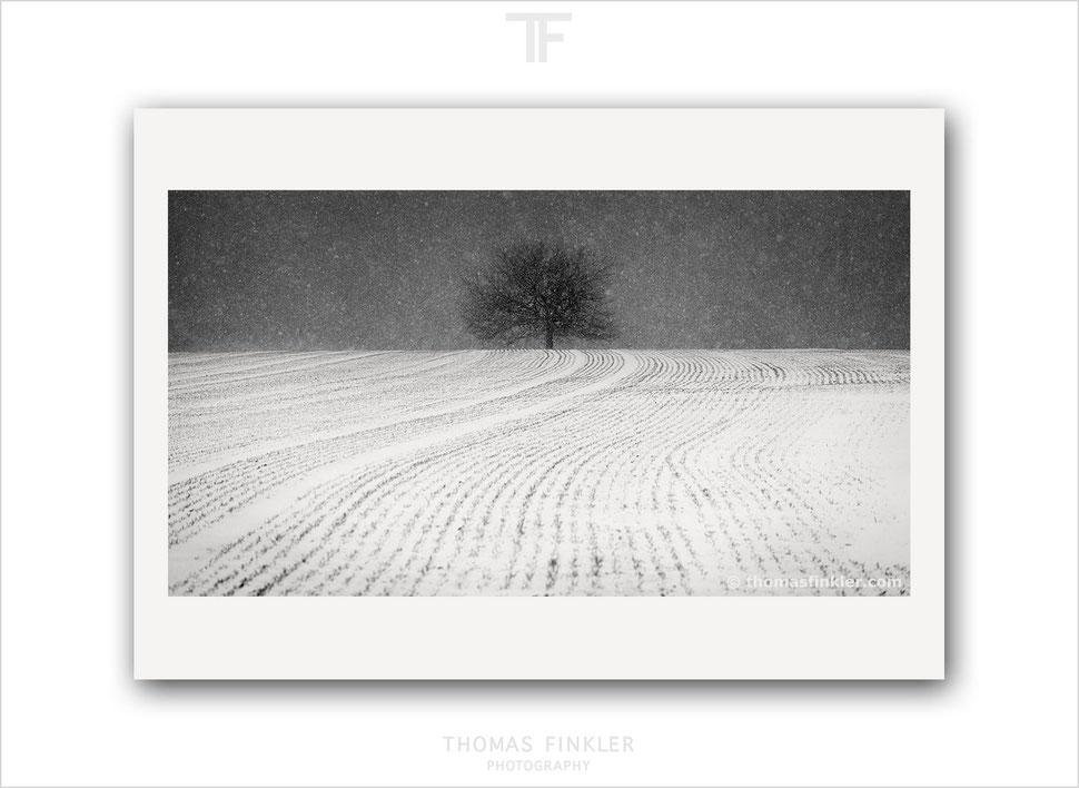 Limited edition, minimal, minimalist, fine art, photography, black and white, tree, nature, landscape, trees, snow, winter, prints