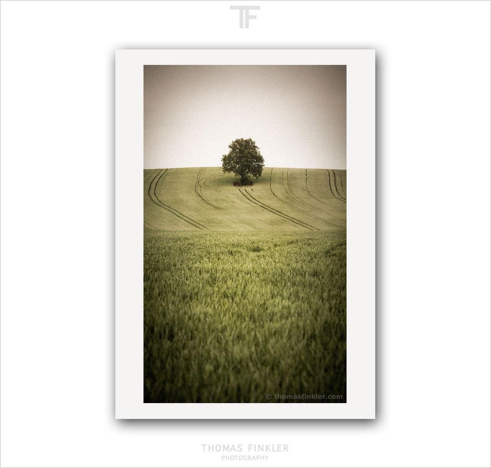 Art, fine art, photography, tree of life, single tree, solitary tree, nature, landscape, tree, minimal, minimalist, limited edition, print, online