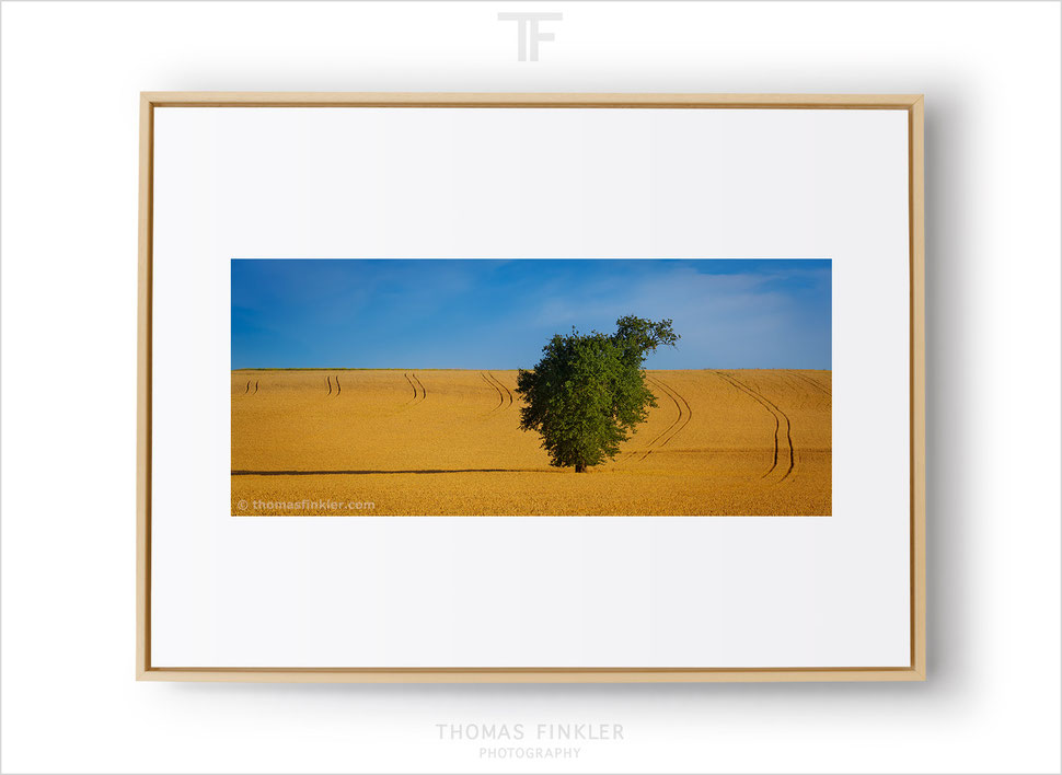 Fine art, photography, print, nature, landscape, tree, minimal, minimalist, limited edition, art, prints for sale, buy prints, framed, online