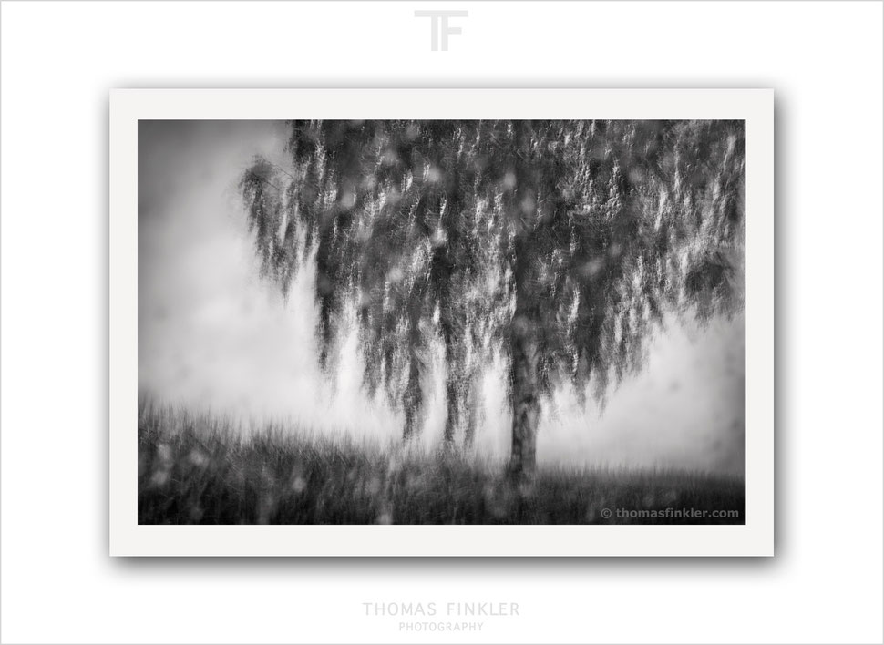 Fine art, photography, print, black and white, monochrome, tree, impressionist, atmospheric, abstract, nature, prints for sale, buy prints