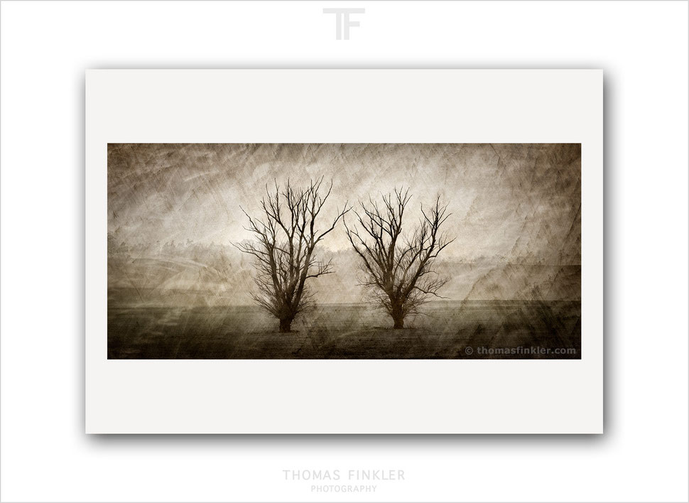 Fine art, photography, print, tree, nature, landscape, trees, atmospheric, poetic, muted colors, color, art, prints for sale, buy prints
