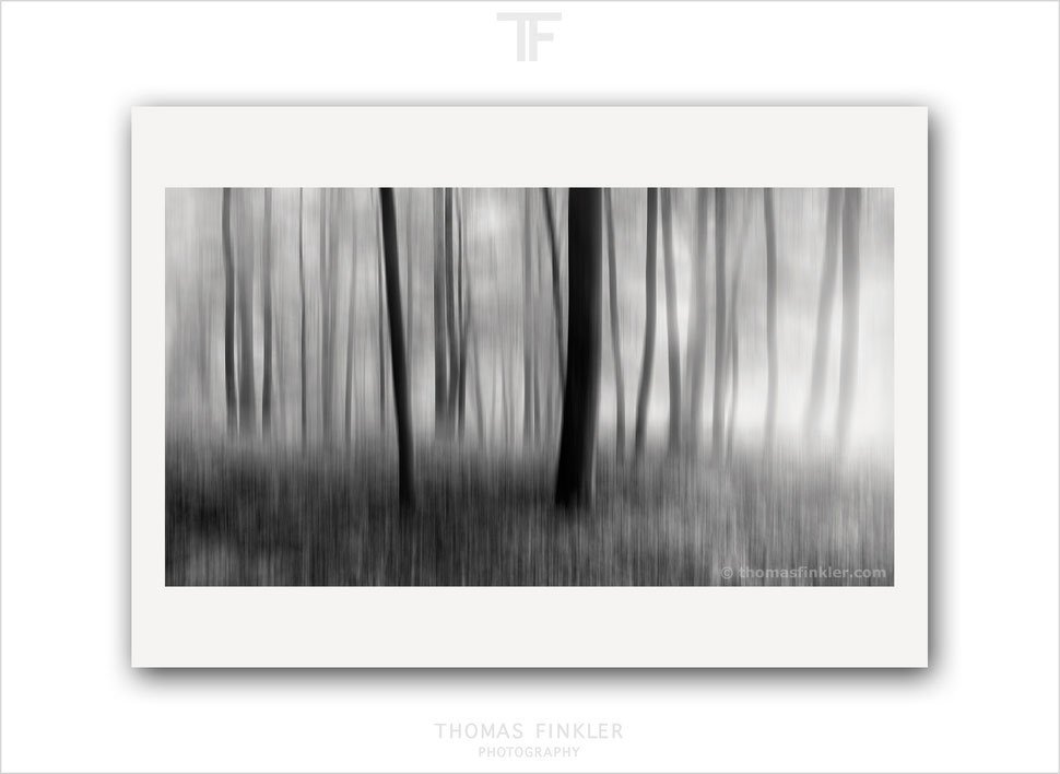 Fine art, print, prints, black and white, monochrome, abstract, tree, nature, photography, art, prints for sale, buy prints, limited edition