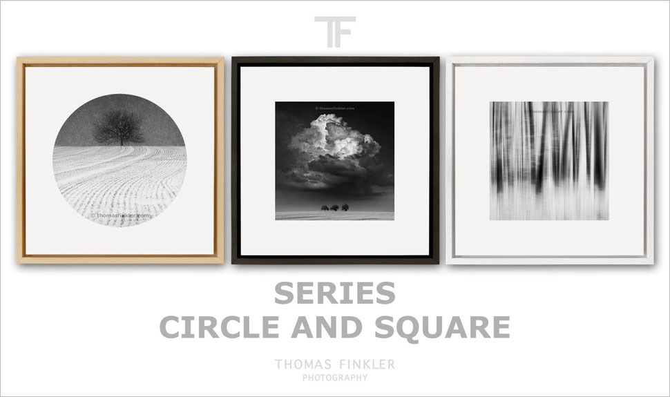 Fine art, photography, black and white, monochrome, nature, trees, series, minimalist, limited edition, square, circle, framed
