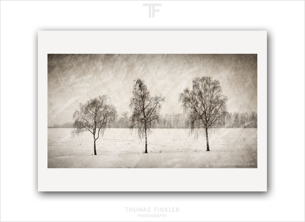 Fine art, photography, print, tree, nature, landscape, trees, winter, snow, silence, poetic, mood, art, prints for sale, buy prints