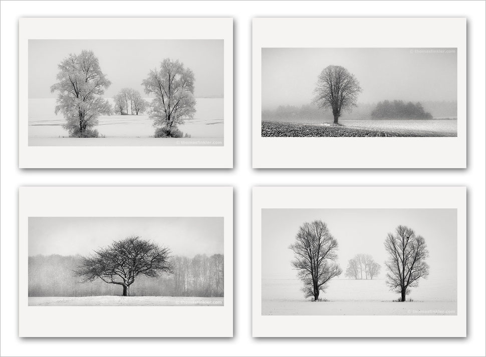 Fine art photography, art photography, black and white, monochrome, tree, nature, minimalist, photographer, artist, german, germany