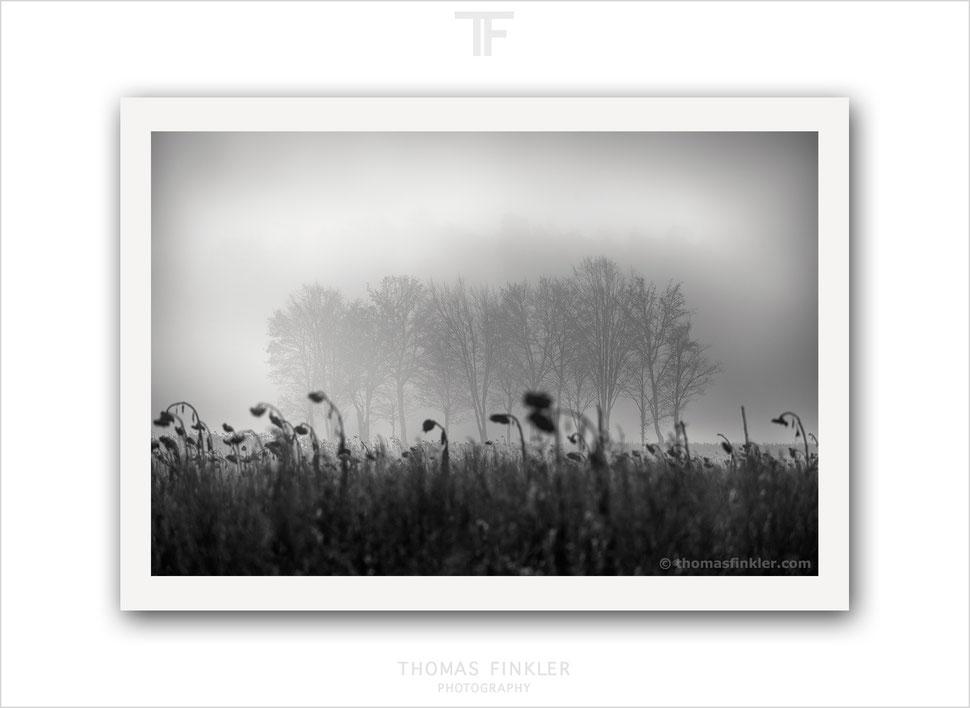 Fine art, photography, print, black and white, monochrome, tree, nature, trees, mist, poetic, atmospheric, art, prints for sale, buy prints