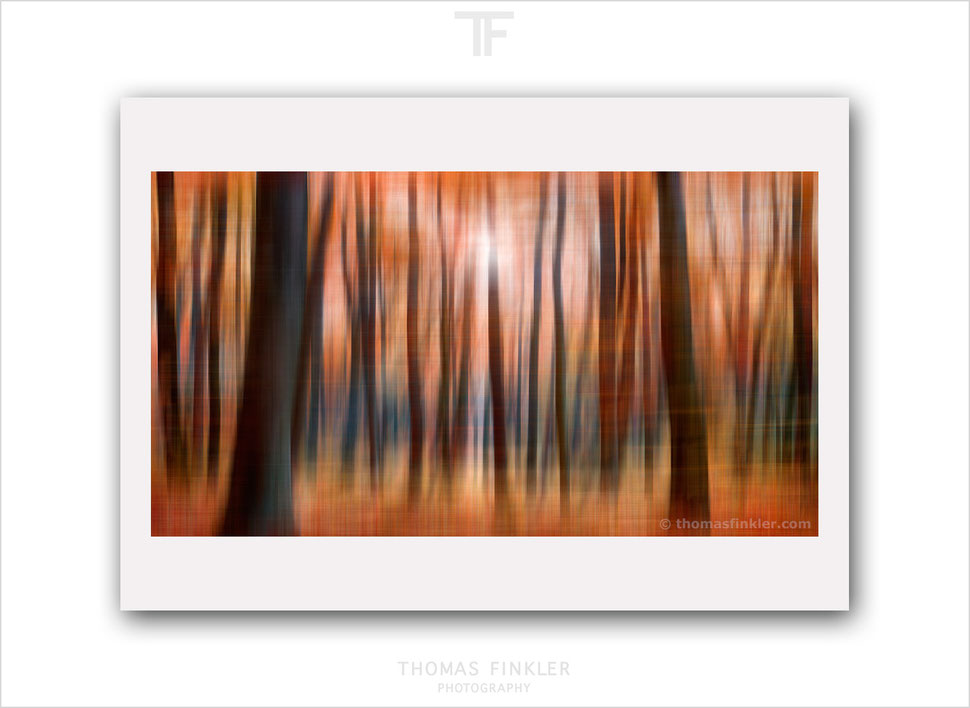 Fine art, abstract, photography, print, nature, forest, woodland, tree, limited edition, art, color, colour, prints for sale, buy prints, online