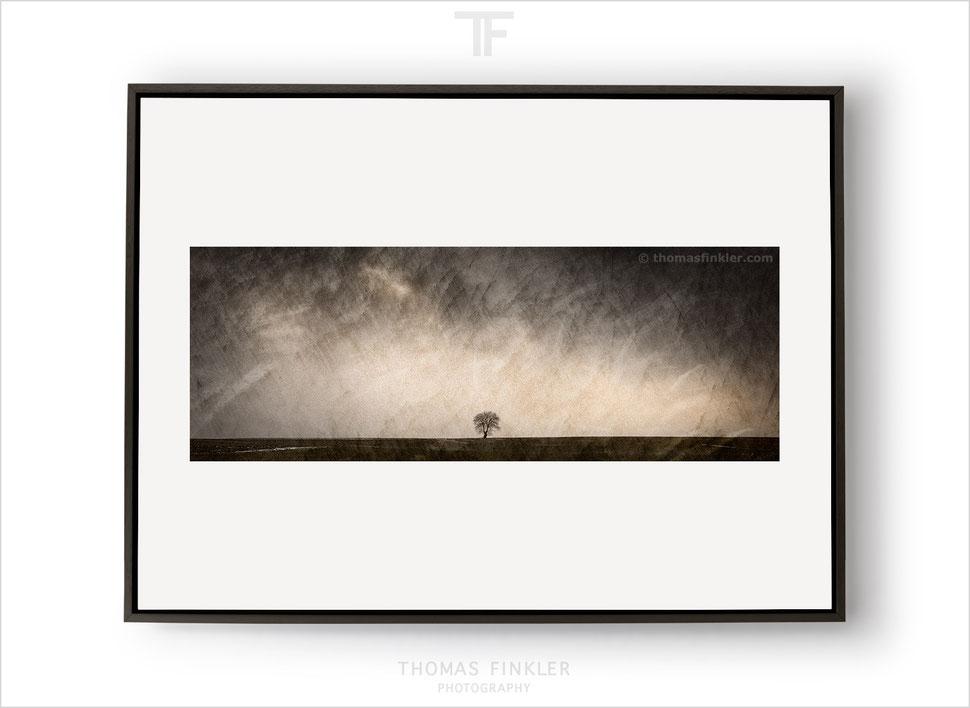 Fine art, photography, print, nature, landscape, tree, minimal, minimalist, limited edition, art, framed, online, prints for sale, buy prints