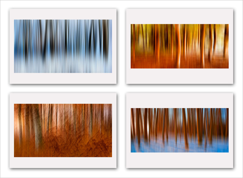 Abstract nature photography, abstract forest photography, fine art, vision, composite, post-processing, award winning, trees, color