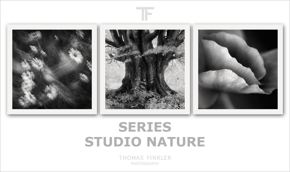 Fine art, photography, photographer, black and white, monochrome, nature, series, amazing, limited edition, german, germany