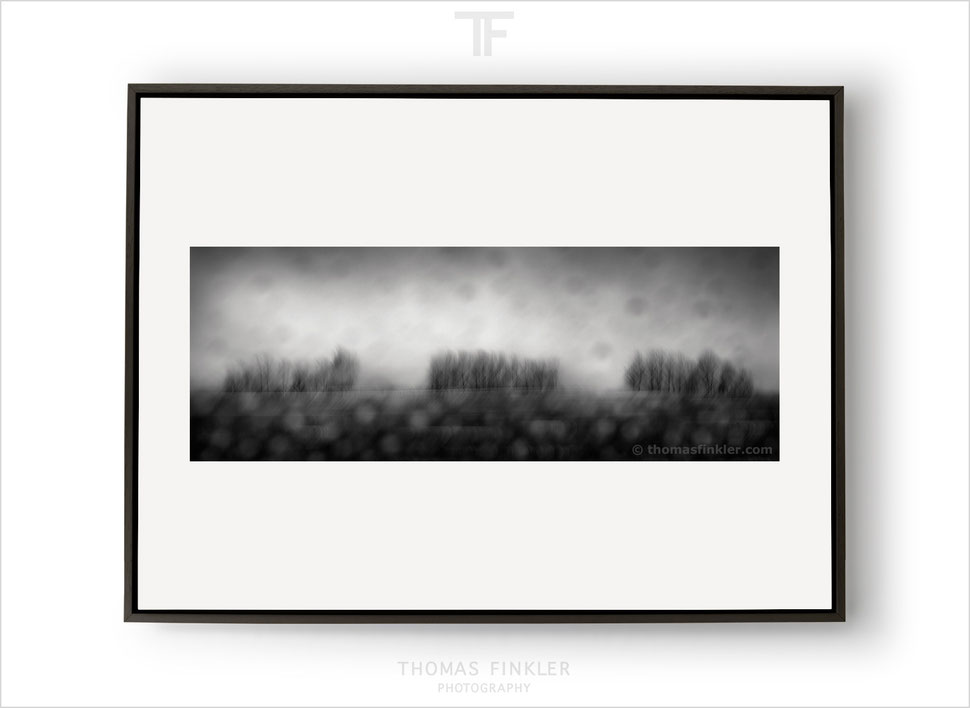 Fine art, photography, print, monochrome, black and white, panoramic, panorama, abstract, tree, art, framed, prints for sale, buy prints
