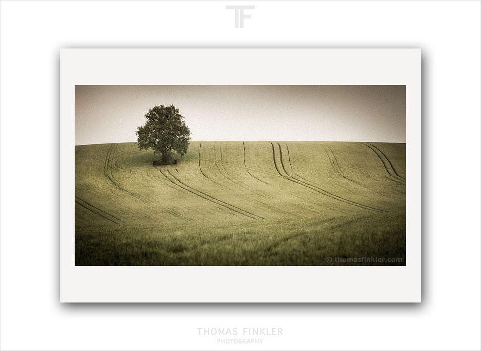 Art, fine art, photography, tree of life, single tree, solitary tree, nature, landscape, tree, minimal, minimalist, muted colors, muted tones