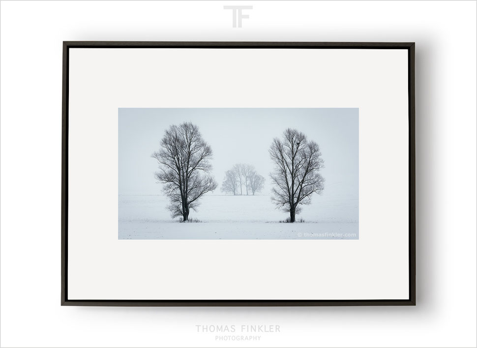 Fine art print, buy fine art prints, fine art prints for sale, limited edition, fine art photography, nature, landscape, trees, winter, snow