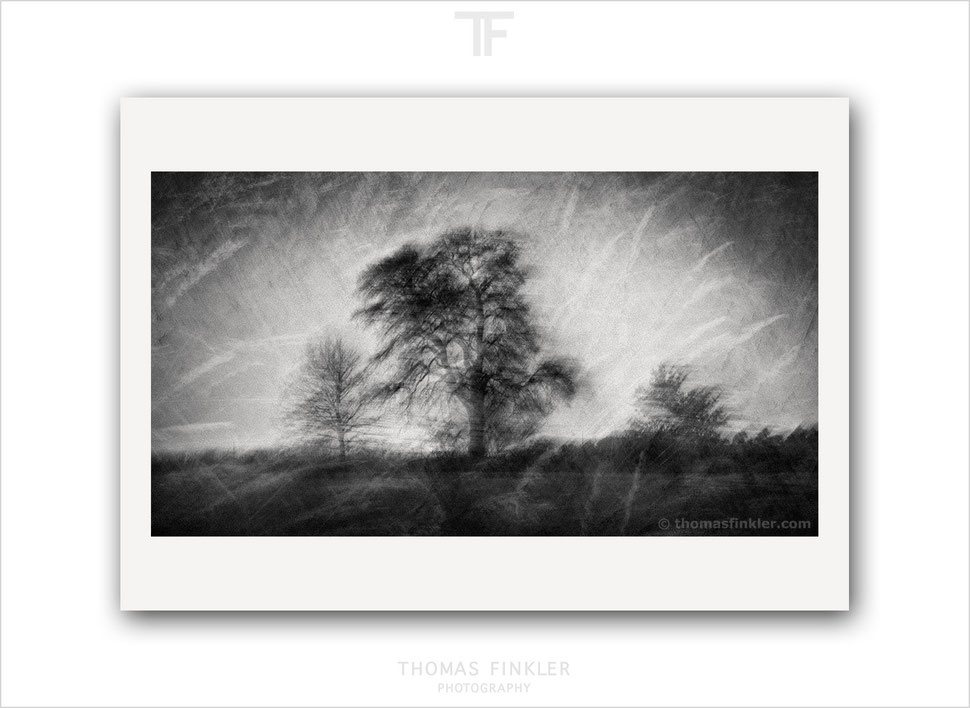 Fine art, photography, print, black and white, poetic, atmospheric, melancholy, impressionist, tree, art, buy prints, prints for sale, online