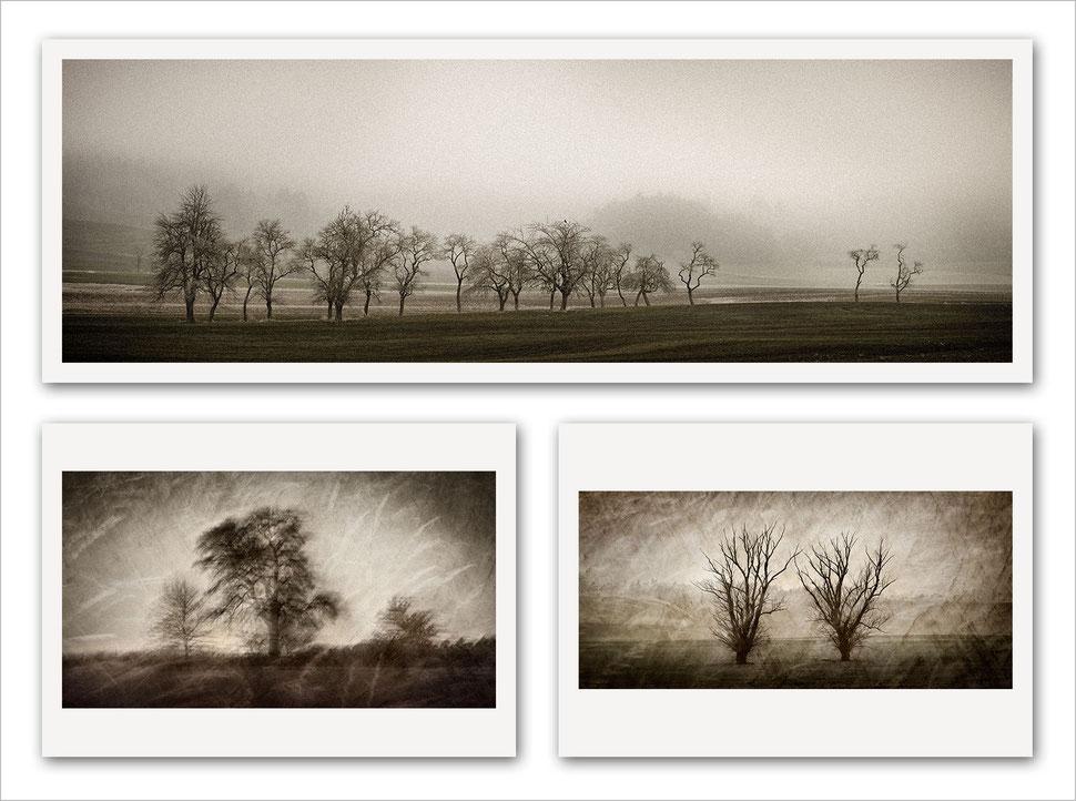 Fine art, photography, art photography, photographic art, tree, nature, trees, photographer, artist, german, germany, bavaria